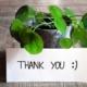 Piantina verde con un bigliettino con scritto thank you