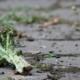 broccoli-cucina-con-gli-scarti-ikea-scrapsbook-giada-rochetto-cucina-del-riciclo